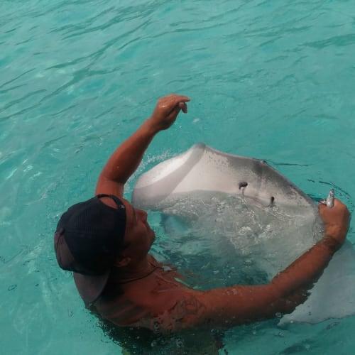 ビーチでは、エイや魚が見られる。このツアーではシュノーケルとかを貸してくれるが、自前のを持って来ればよかった。 エイは人に慣れていて、触ることも可能。 | モーレア島(フランス領ポリネシア)