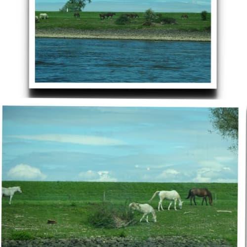 船内からの景色 鳥は言うまでも無く、羊の大群や 野生の馬も・・・