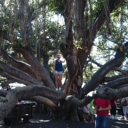 町の交差点に生えている木