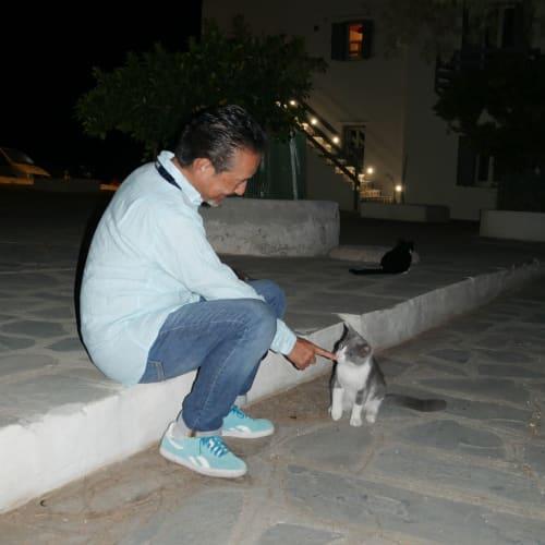 マトヤニ通りに向かう途中でニャンコ達に会う 指を出すと必ず臭いを嗅ぎに来る世界共通の猫の掟 | ミコノス島