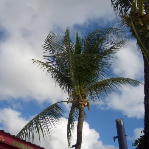 Barbadosの青い空。 | ブリッジタウン
