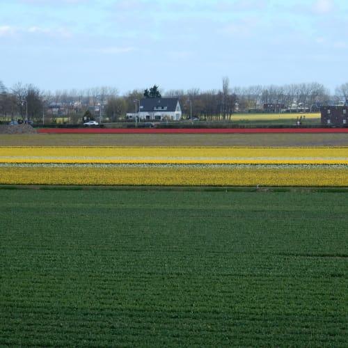 Day7#アムステルダム#キューケンホフ公園#風車の上から見た花畑 | アムステルダム