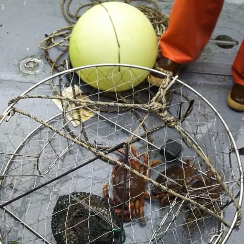ツアーで実際にカニ漁をボートで見学…サイズが小さいもの、メスは採らないそうです。 | ケチカン(レビジャヒヘド諸島 / アラスカ州)