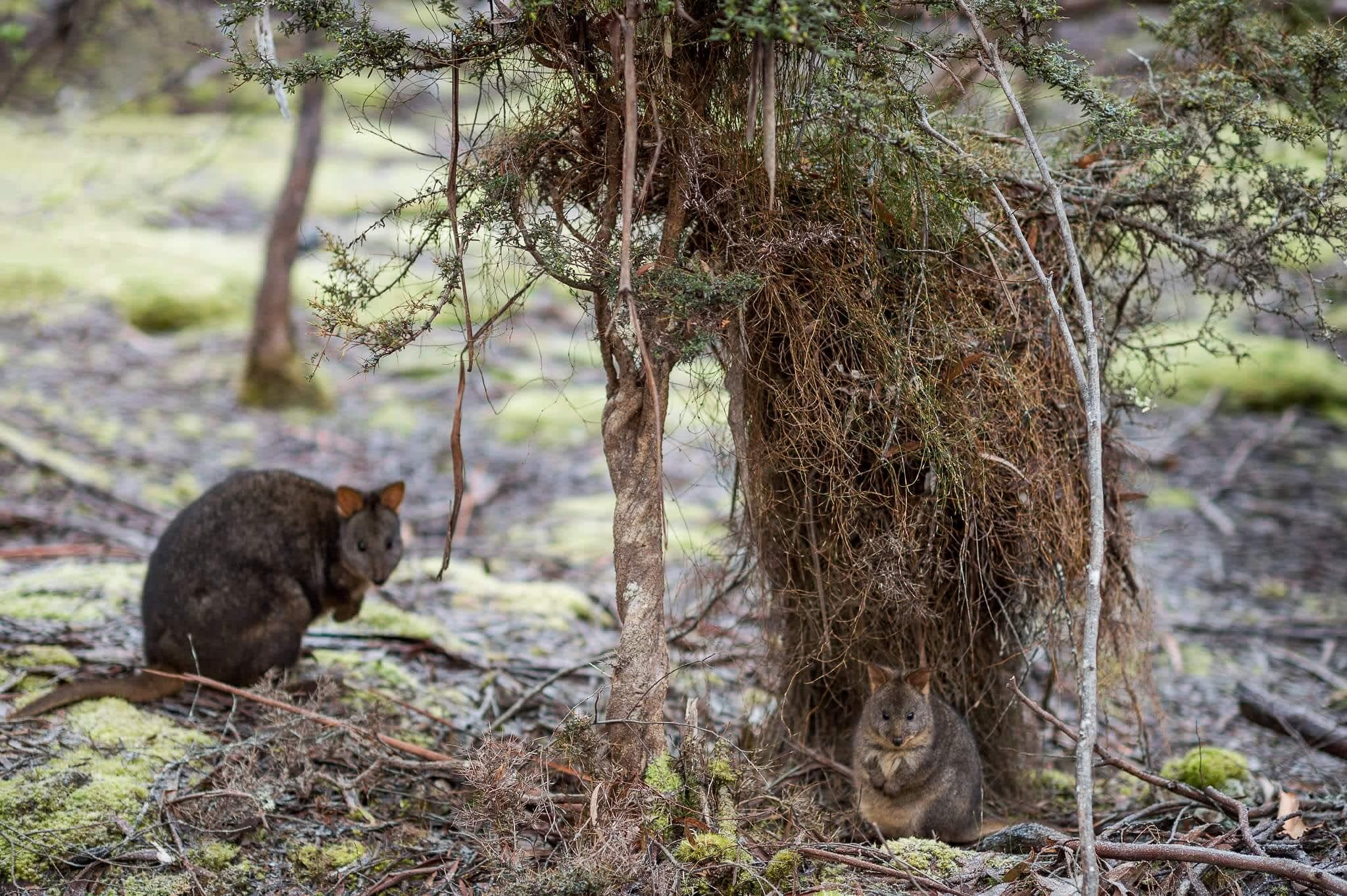 10 Things You Must Do In Tamar Valley, Tasmania I Cruisin Motorhome Hire Tasmania