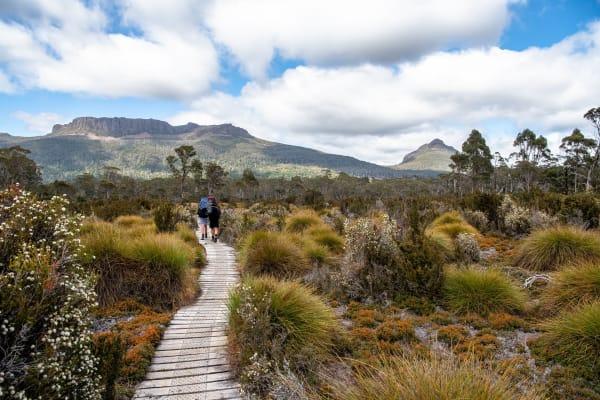 Bushwalk In Australia