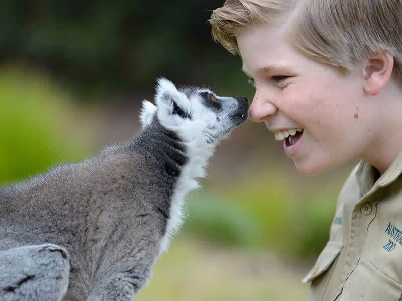 10 Family Friendly Activities In Brisbane I Cruisin' Motorhome Hire Brisbane