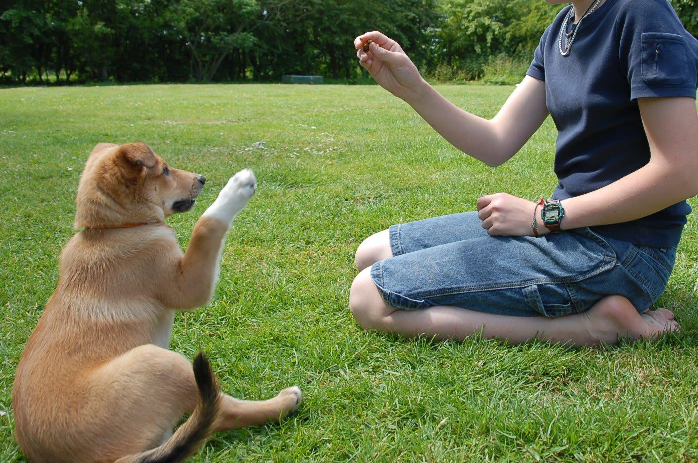 puppy obedience school oahu craigslist