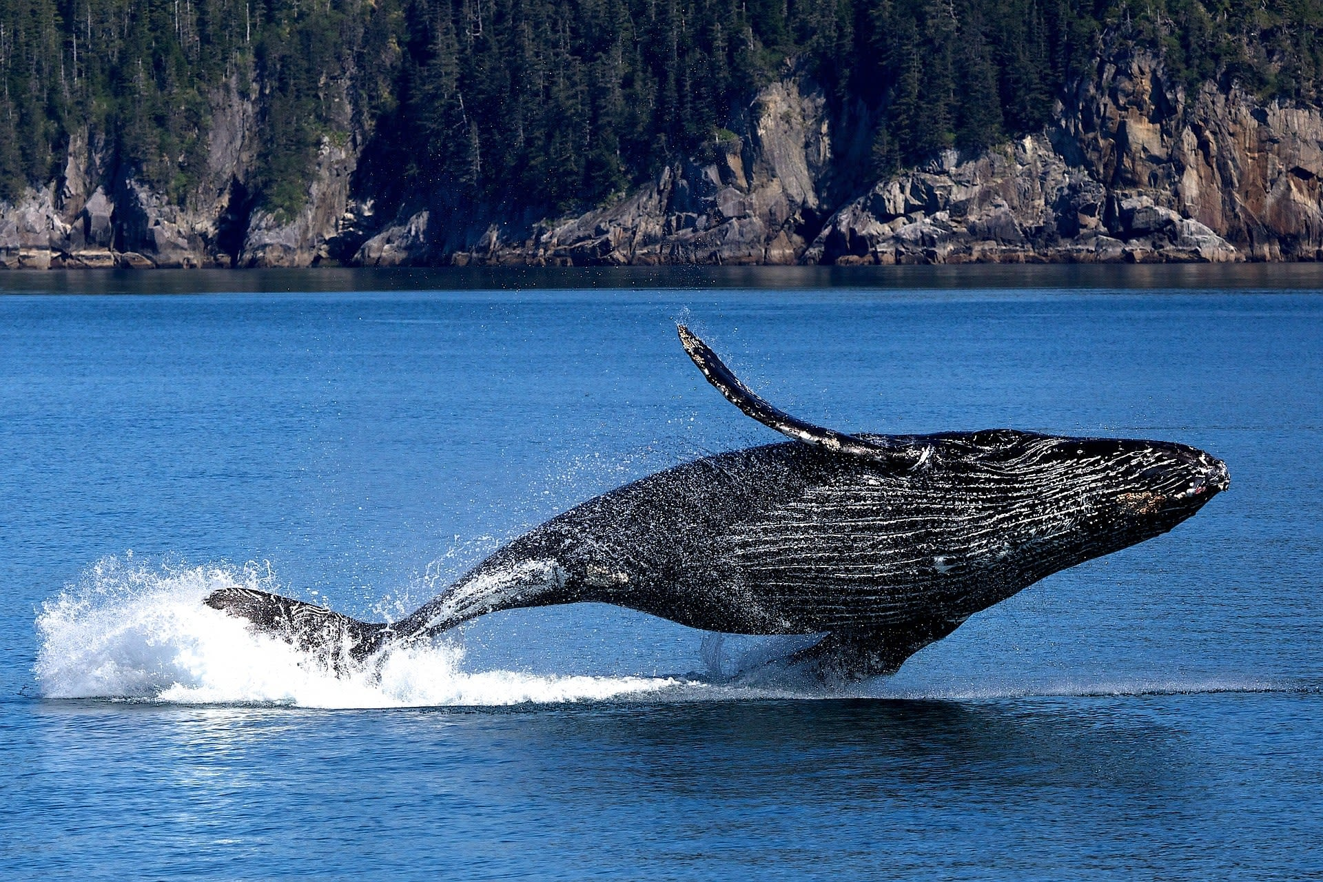 Should crypto investors worry about Bitcoin whales?