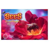 Bees: The Secret Kingdom Thumb Nail