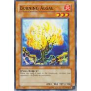 Burning Algae Thumb Nail