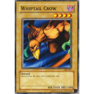 Whiptail Crow Thumb Nail