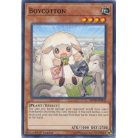 Boycotton Thumb Nail