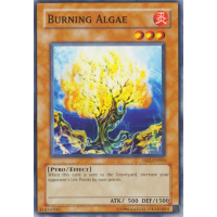 Burning Algae Thumb Nail