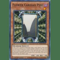 Flower Cardian Pine Thumb Nail