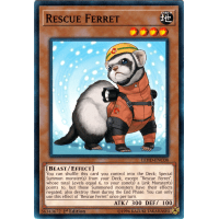 Rescue Ferret Thumb Nail