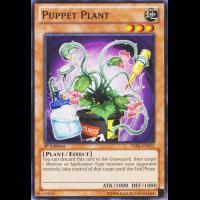 Puppet Plant Thumb Nail
