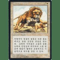 Savannah Lions (Korean) Thumb Nail
