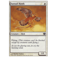 Suntail Hawk Thumb Nail