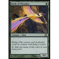 Birds of Paradise Thumb Nail