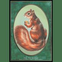 Squirrel (Token) Thumb Nail