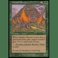 Marker Beetles Thumb Nail