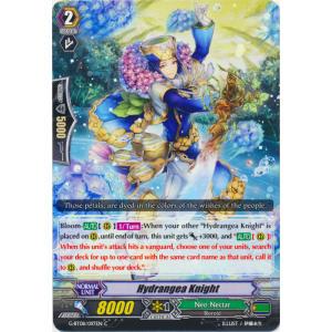 Hydrangea Knight