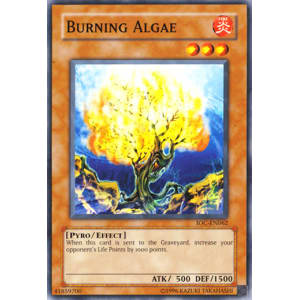 Burning Algae