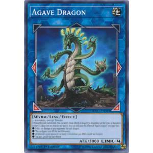 Agave Dragon