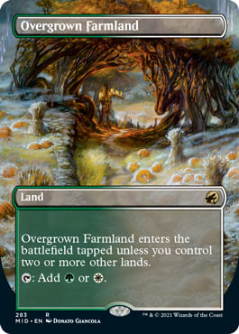 Overgrown Farmland