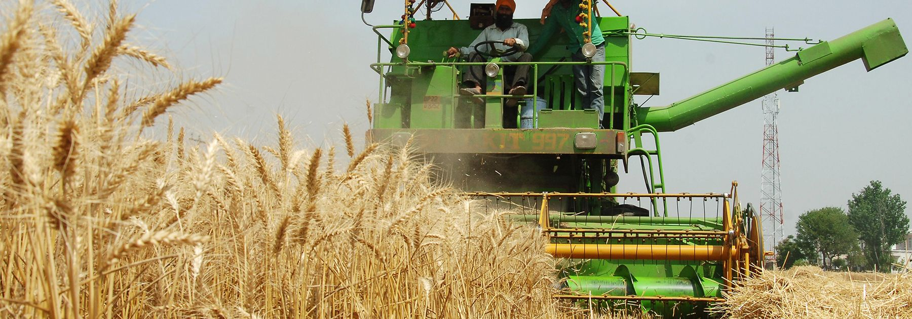 A farmer uses a combine to plough a wheat field on the outskirts of Amritsar. (Photo credi: NARINDER NANU/AFP/Getty Images)