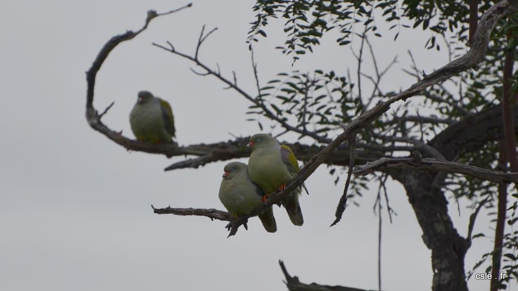 oiseau Afrique du sud safari (2)