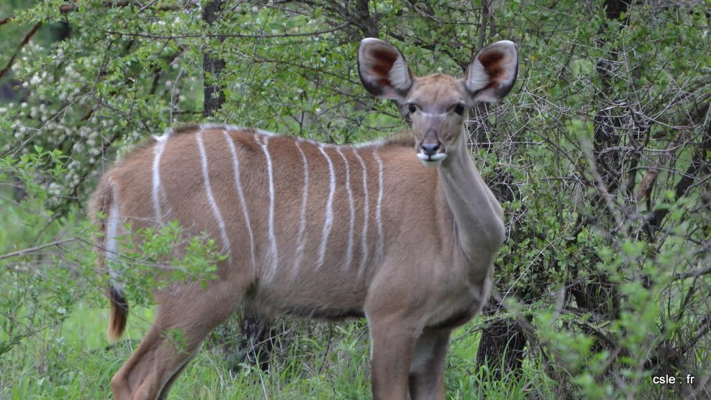 safari Afrique du sud (4)