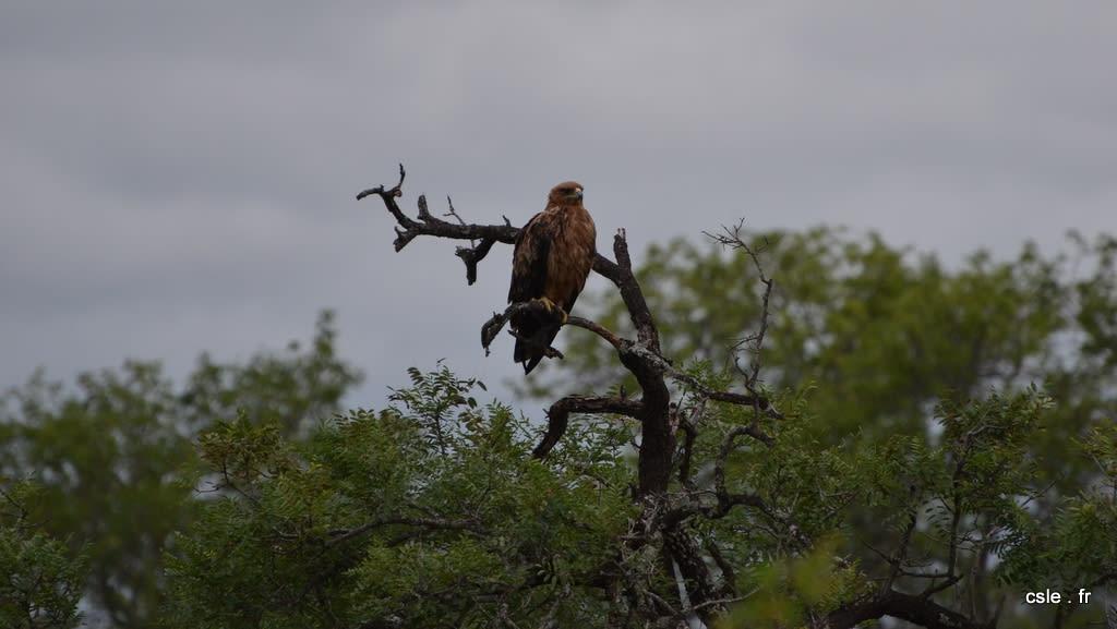 oiseau Afrique du sud safari (7)