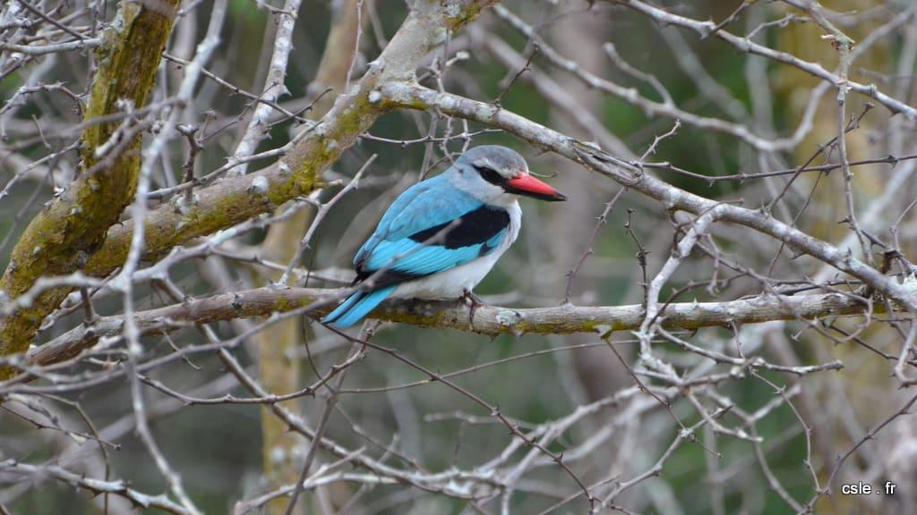 oiseau – safari afrique du sud