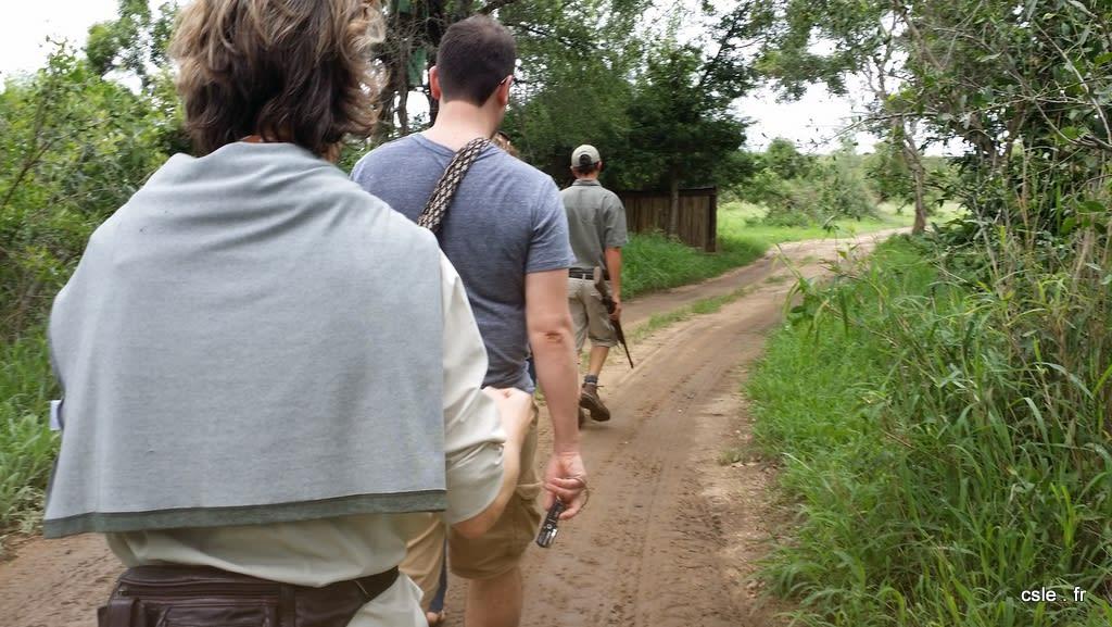 safari à pied en ligne