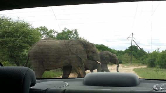 fin du safari sabi sand afrique du sud