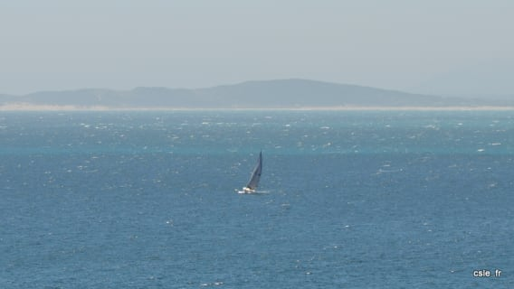 baleine à Hermanus