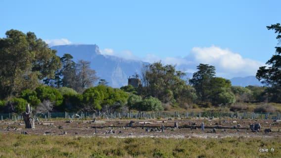 Cimetiere Robben Island