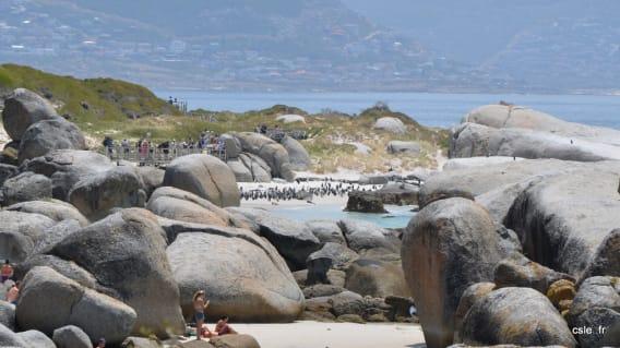 plage boulders beach