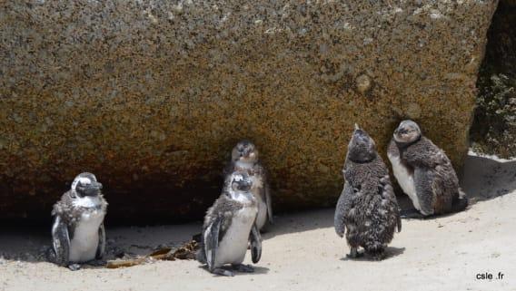 Mu du pingouin