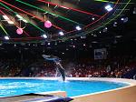 Dubai Dolphinarium Promo Codes