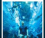 Dubai Aquarium & Underwater Zoo Promo Codes & Coupons