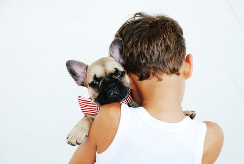 pet supplies on nownow