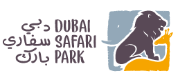 Dubai sarari promo code