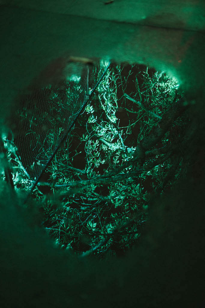 Lit trees reflected in a puddle