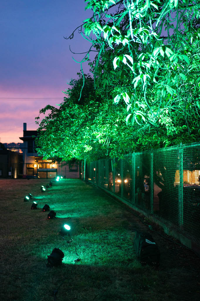 Trees lit by green light during dusk