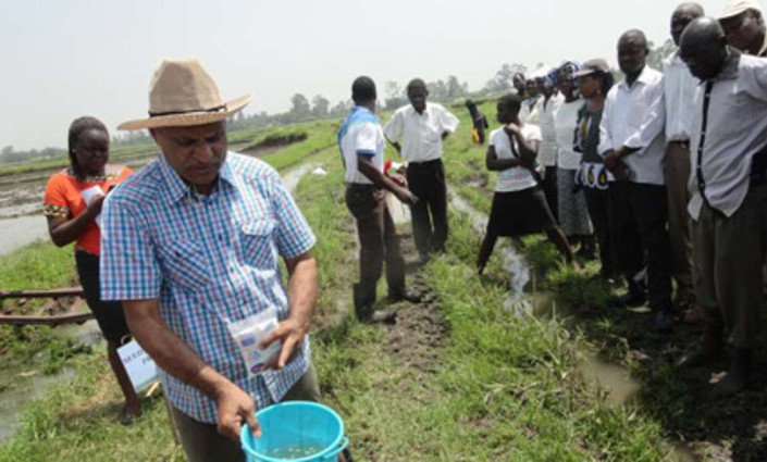 Mr Kyshan Rao, an Indian engineer and farmer, shows farmers how to select good planting seeds in Ahero Irrigation Scheme, Kisumu County. @ ANITA CHEPKOECH