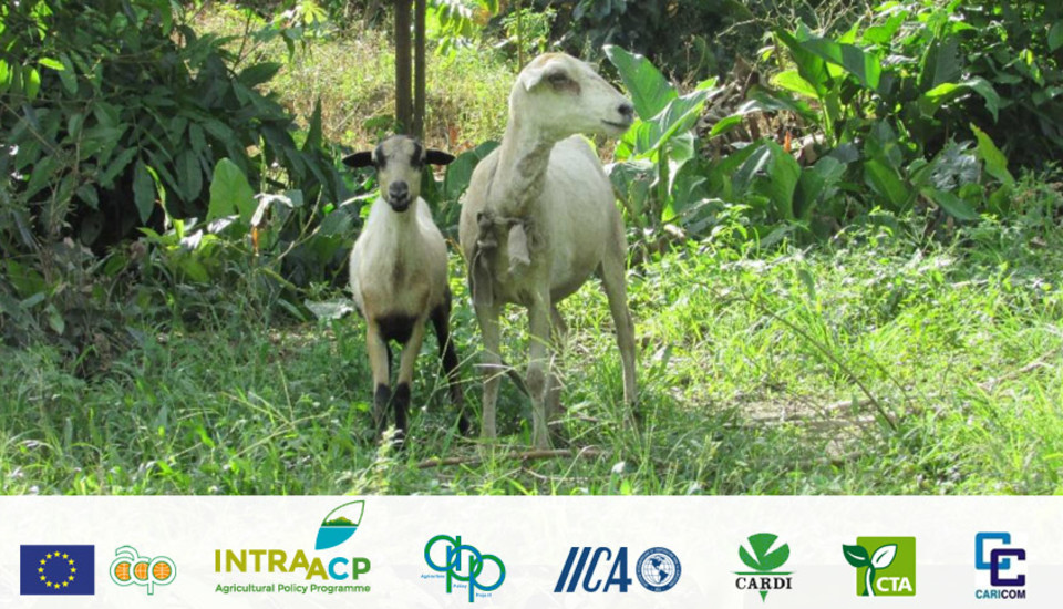 Increasing the supply of Sheep and Goat Meat Products for