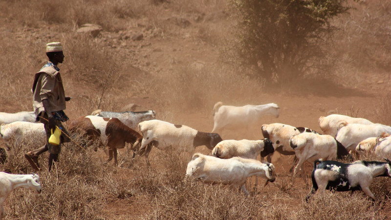 Climate-smart strategies for pastoralists