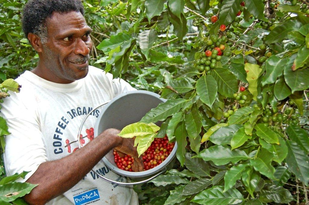 Johnny Willie coffee grower Tanna